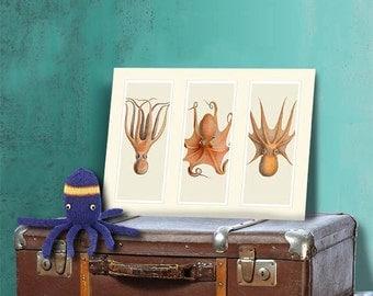 Kraken wall art Trio of Octopus on 3 Panels, Octopus art Nautical print Bathroom Decor Art coastal wall art Decorative art Nautical Decor