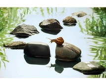 Snail Crossing: 8x10 nature art photographic print. Comes in many sizes on pearl or metallic photo paper.