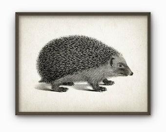 Hedgehog Vintage Illustration Wall Art Poster (AB69)