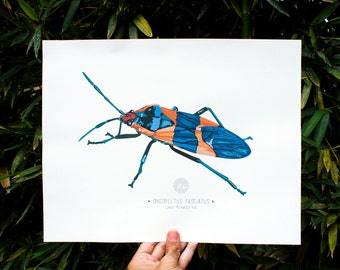 Large Milkweed Bug Art Print Illustration