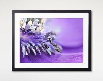 Print Framed Purple Anemone Art, Macro Photography, Nature Wall Art, Home Wall Decor, Floral Print