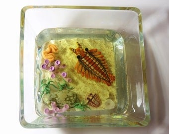ANOMALOCARIS in resin Cambrian ocean habitat with TRILOBITES and VAUXIA by Kate Turner