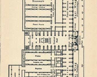 1956 Natural History Museum London Antique Floor Plan