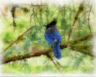 Digital Art: Blue Steller's Jay Bird in Green Forrest, Birds Photo, Nature Photo, Wall Decor photo, Fine Art Photography Print [grn]