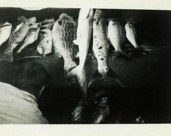 "Snapshot Photo ""Bermuda Fish"" Vintage Photo Old Antique Photo Black & White Photography Found Photo Paper Ephemera Vernacular Fishing - 10"
