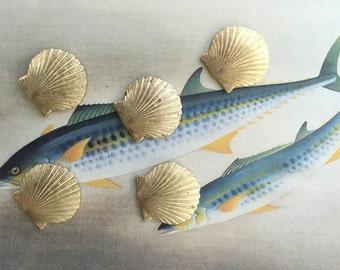 Small Scallop Shells (4 pc)