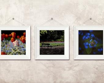 Flower photography, Fine Art Photography, Set of 3, tulip art, bench photo, forget-me-not, flower print, park, blue wall art, floral decor