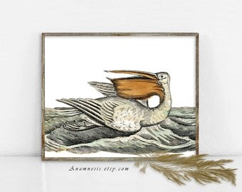 PELICAN ADRIFT - digital download - printable antique illustration retooled by Anamnesis - image transfer - totes, pillows, prints, clothes