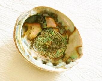 Vintage Cottage Home French Blue, Celadon Green, and Cafe au Lait Abalone Shell, Coastal Vintage, Olives and Doves