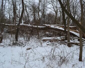Photo of fallen tree in Winter