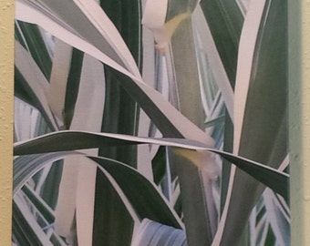Summer Reeds Original Fine Art Photography on Canvas