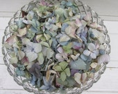 10 Cups Loose Dried Hydrangea Flower Petals for Confetti, Wedding, Flower Girls, Potpourri, Craft, Flower Cones, DIY