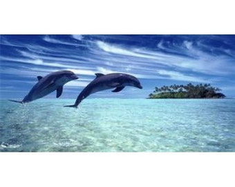Dolphins Jumping Photo License Plate - LPO828