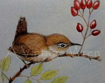 Wren art/ Fine art/ Original art/ Bird art