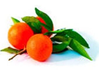 Seedless Tangerine Tree (Grafted) /Bonsai Tree/Fruit Tree/Citrus Tree/Flowering Tree/Live Tree/Live Bonsai