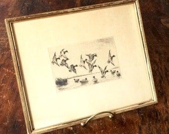 Paul F. Berdanier etching, ducks