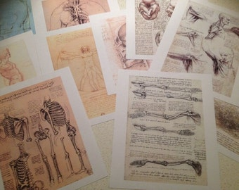 x10 set Da Vinci Anatomy Portfolio