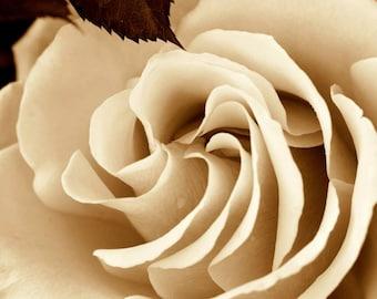 Umber Rose, High Quality Lustre Print, 8x10