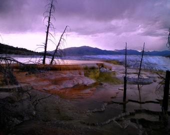 Purple Springs