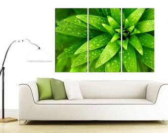 "3 Panel Split /Triptych Green plant Canvas Print, 1.5"" deep frames, Close-up flower photography for living room decor & interior design"
