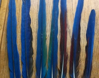 Qty of 7 Long Parrot Macaw Tail Feathers for Jewelry and Crafts