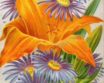 Aster & Daylily Flowers 1922 Jazz Age Botanical Lithograph To Frame Michalmas Daisy Day Lily