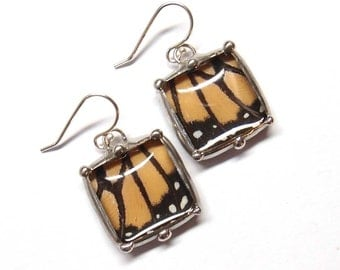 Real Monarch Butterfly Dangle Earrings - Little Bubble Squares on French Ear Wires
