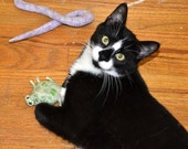 cat toy, catnip bug, catnip toy, catnip pellet toy, coral graphic fabric