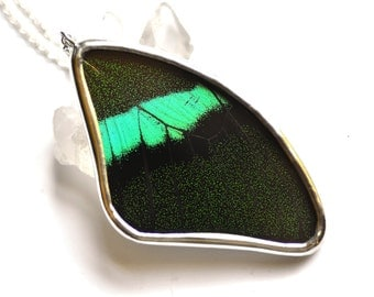 Real Butterfly Wing Necklace Papilio blumei Swallowtail Fore Wing