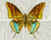 Yellow, Brown and Aqua butterfly print