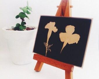 Original Art - Flower ACEO - Botanical Artwork - Black and White Photogram