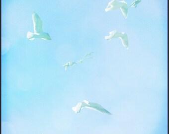 Seagulls Blue Sky Photograph--Gliding--Fine Art