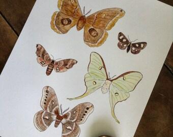 Moths Print - Digital - Printable PDF