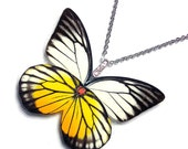 Real Butterfly Wing Necklace / Pendant (WHOLE Prioneris Philonome Butterfly - W005)