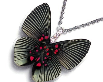 Real Butterfly Wing Necklace / Pendant (WHOLE Lyropteryx Apollonia Butterfly - Verso - W107)