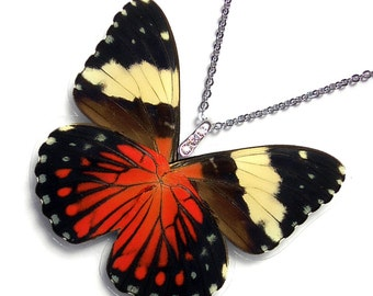 Real Butterfly Wing Necklace / Pendant (WHOLE Hammadryas Amphinome Butterfly - W115)