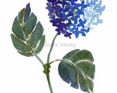 Indigo Hydrangea Giclee on Canvas