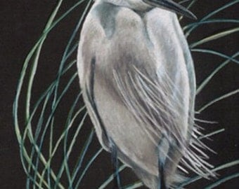 Colored Pencil Snowy Egret Drawing