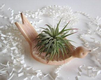 Air plant holder, dove planter, Ring holder, Desk decor, In Stock, Hand made Ceramic Pottery
