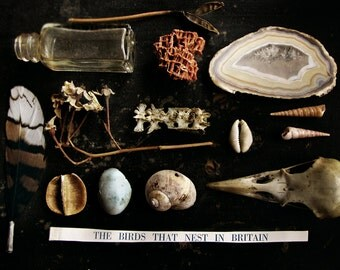 8X 10 print of natural found objects - wonder cabinet collection - fine art photograph - nature still life - The Naturalist