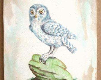 Baby White Owl 5x7 art tile