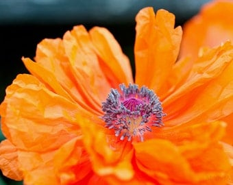 Poppy Flower Photo, Poppies Photography, Orange Home Decor, Floral Wall Art, Macro  Flower Art, Bright Colors, Botanical
