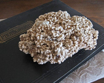 Vintage Fossilized Brain Coral Natural History Specimen