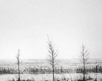 zen tree photo, tree photograph, nature photo, minimalist, landscape photo, black white landscape, fog, foggy, trees, Ontario, serene, zen