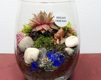 Succulent Moss Terrarium, Choose your Pal