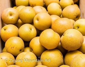 Asian Pear art for kitchen.  Fruit wall art or kitchen wall art from food photography.  Fine art print for kitchen decor or wall art.