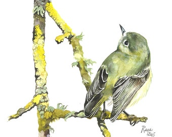 Limited Edition GICLEE Print / Watercolor Painting of a Ruby-crowned Kinglet