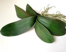 Popular Items For Orchid Pot On Etsy