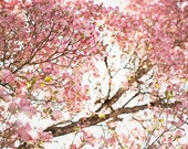 "Nature Photography, Dogwood Tree, Dreamy Pink Pastel, Floral Print, Nursery Room Art, Pink Girls Room, Spring Trees ""Dogwood Bloom"""