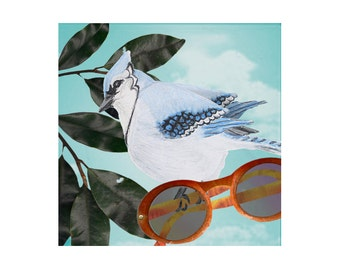 Bird Art Mixed Media- Blue Jay Steals Summer Sunglasses